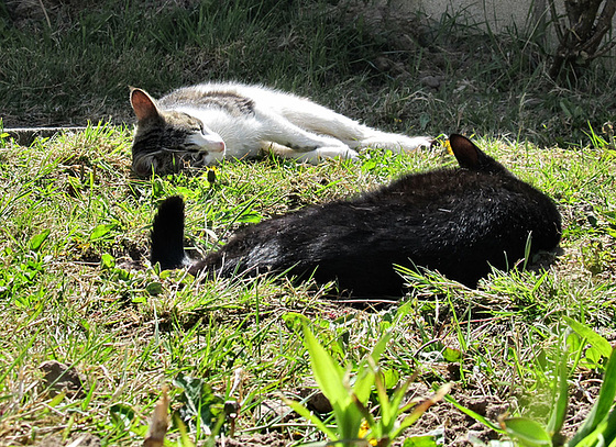 14 cats sunbathing