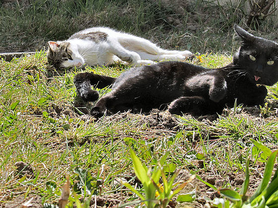 13 cats sunbathing