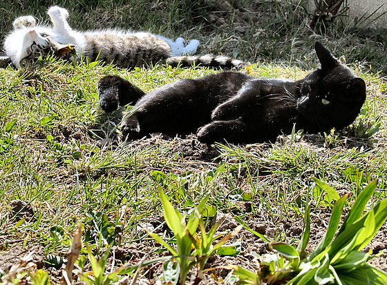 12 cats sunbathing