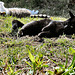 12 cats sunbathing