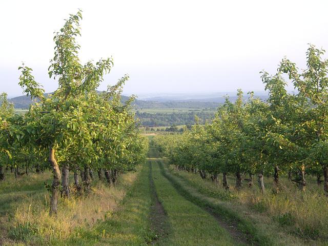 Apfelplantagen am Rande des Böhmischen Beckens