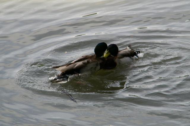 Jeux sur l'eau
