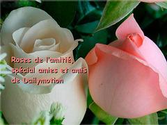 Roses de l'Amitié