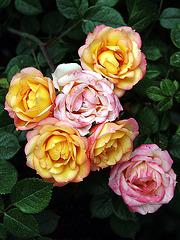 Happy Friday Flowers