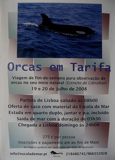 """Escola de Mar """"School of Sea"""", Orcas in Tarifa (Spain), 19/20 July 2008"""