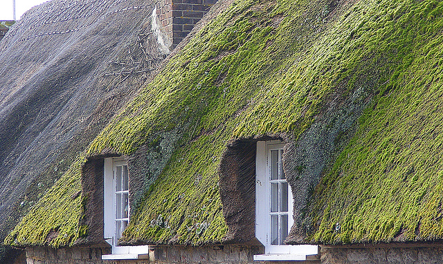 Green eaves