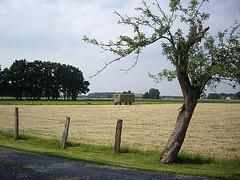 im Münsterland bei Warendorf