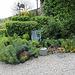 Massif avec Euphorbia charassias