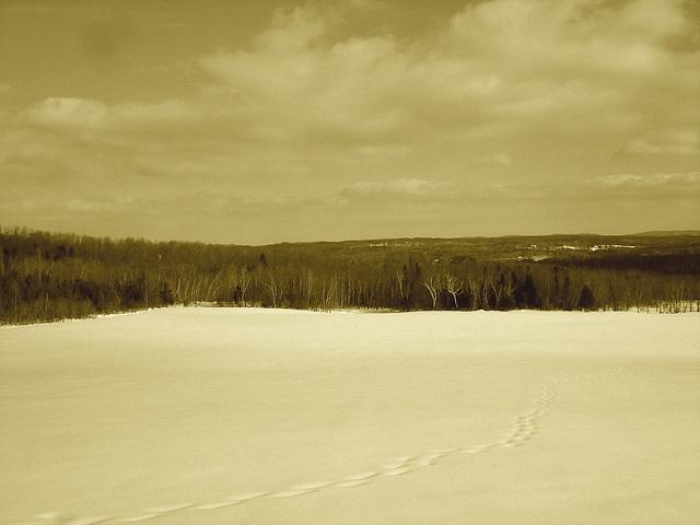 Paysage de l'hiver Québecois /   Quebec winter landscapes -  St-Benoit-du-lac .  Février 2009-  Sepia