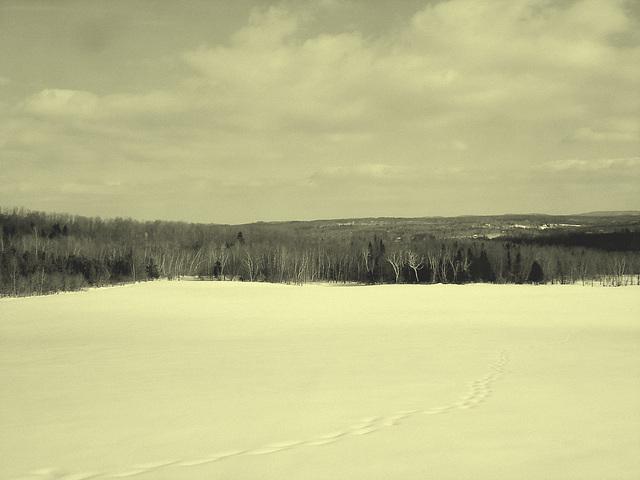 Paysage de l'hiver Québecois /   Quebec winter landscapes -  St-Benoit-du-lac .  Février 2009  - Vintage / En photo ancienne