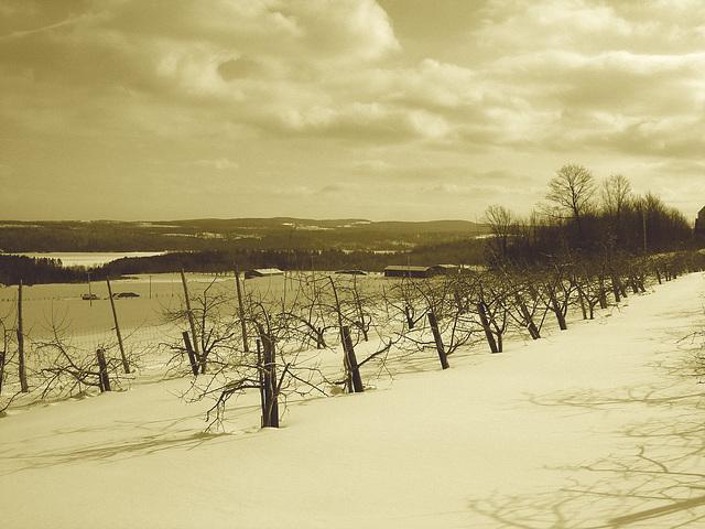 Beauté hivernale à St-Benoit-du-lac au Québec  - Février 2009- Sepia