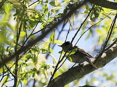 Singvogel im Wald