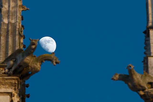 Moon + Gargoyles (1)