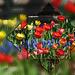 Blumenreigen
