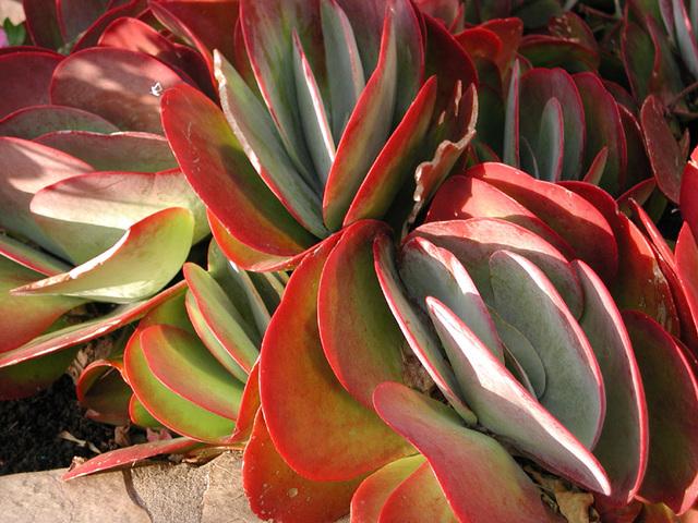 DSCN4644 Pflanze