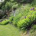 Massifs d'iris