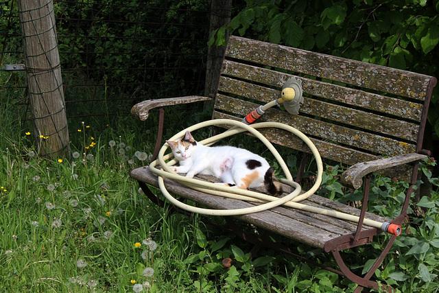 Chat essayant d'arroser un banc