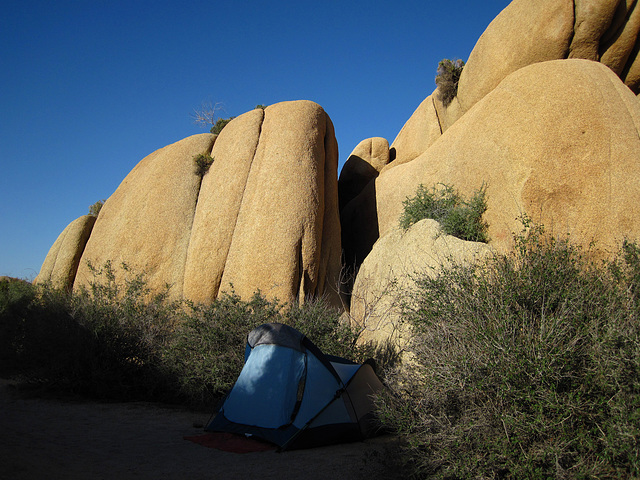 Camp at Jumbo Rocks (4608)