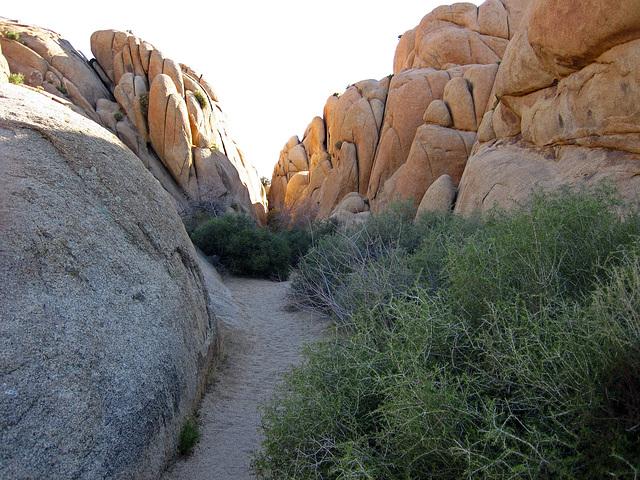 Jumbo Rocks (4606)