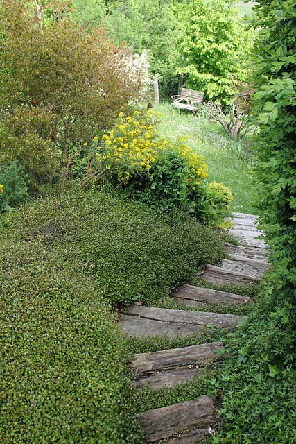 Escalier vers la partie basse , bordé de Muehlenbeckia