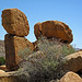 Joshua Tree National Park (4645)