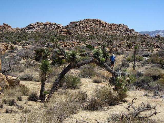 Joshua Tree National Park (4653)