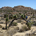 Joshua Tree National Park (4653)