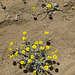 Little Yellow Flowers (4654)