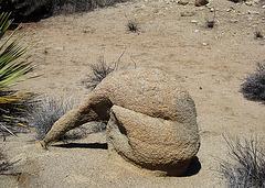 Rock Anteater (4644)