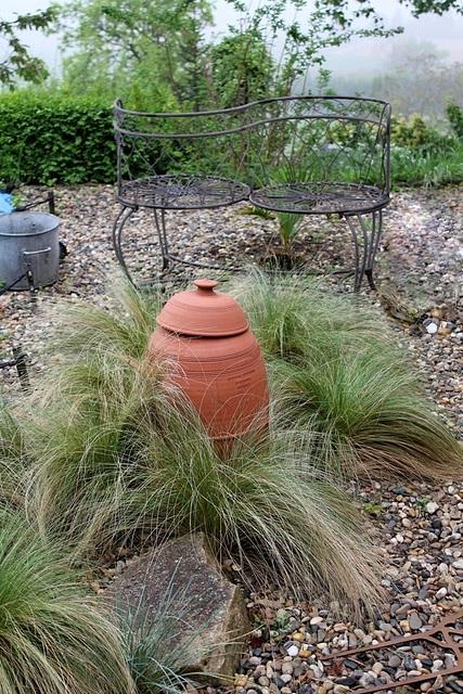 Stipa tenuifolia - autour d'un pot à Rhubarbe