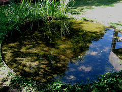 Lisboa, Garden of Foundation Calouste Gulbenkian, artificial small swamp (1)