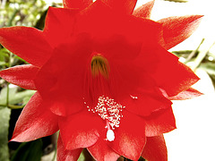 fleur 001