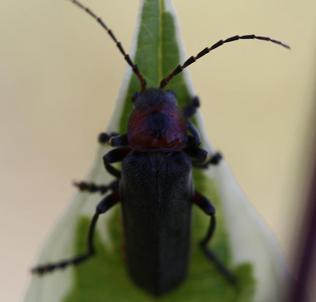 insecte ???