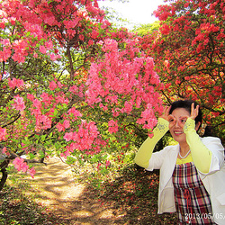 2013.5.5Look!How beautiful the azalea are!Jen!Kiaj belegaj azaleoj estas!看!多么美丽的杜鹃花啊!
