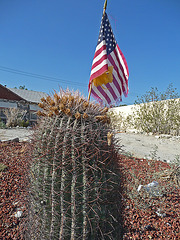 Cactus With Flag (0081)