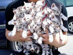 Chats au kilo