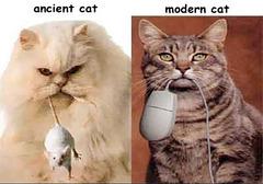 Nouvelle génération de Chats