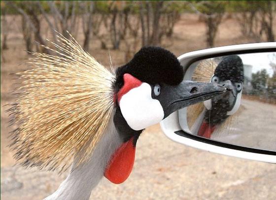 Ah ! Je ris de me voir si belle en ce miroir !