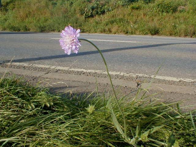 Une fleur qui fait du stop...