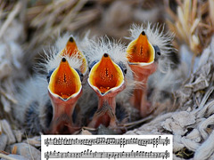 Mozart Chorus