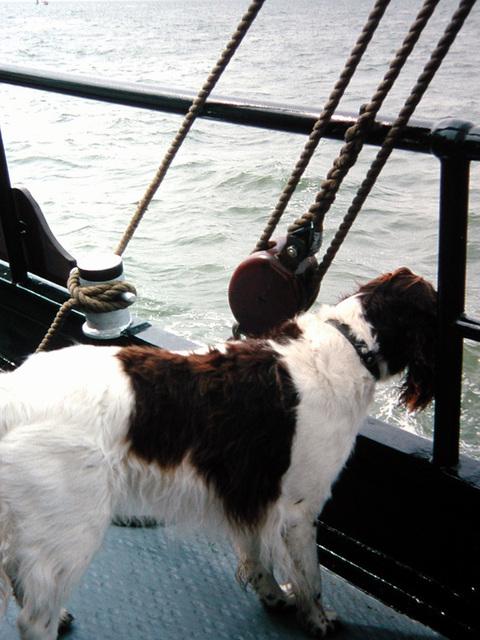 DSCN3051 Der Bordhund