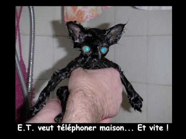 Chat au bain : un horreur !