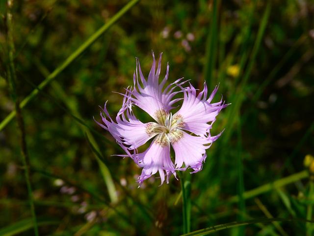 Crazy little flower