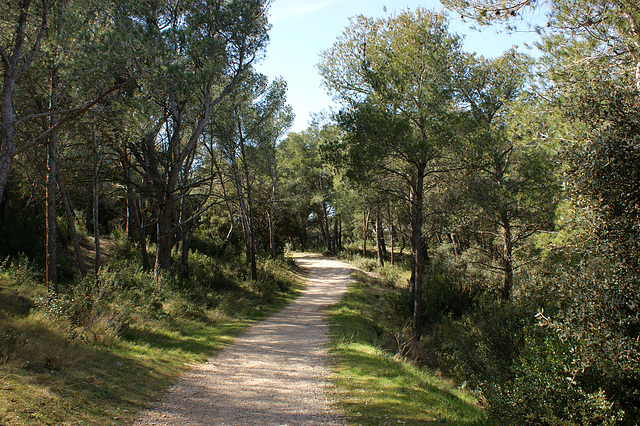 sentier de Provence