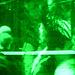 saasfee-greenscreen-1080109