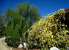Descanso Gardens (2250)