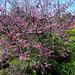 Descanso Gardens (2277)