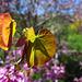 Descanso Gardens (2278)