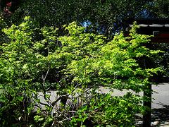 Descanso Gardens (2314)