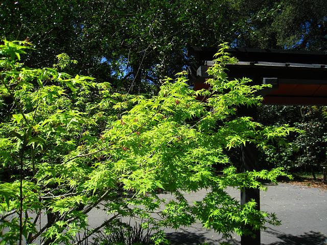 Descanso Gardens (2315)